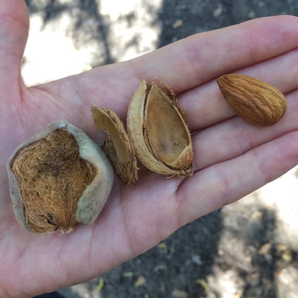 California Almond Board trip from Living Well Kitchen
