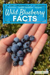 hand holding wild blueberries